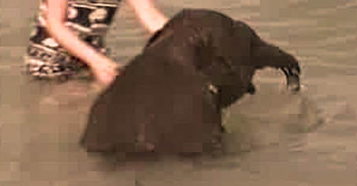 babi-elefant