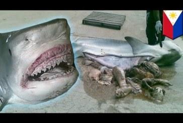 Sokkot kaptak a halászok, amikor meglátták mi van a cápa gyomrában…