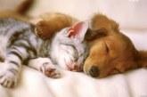 A bolondos cica és a lusta kutya esete
