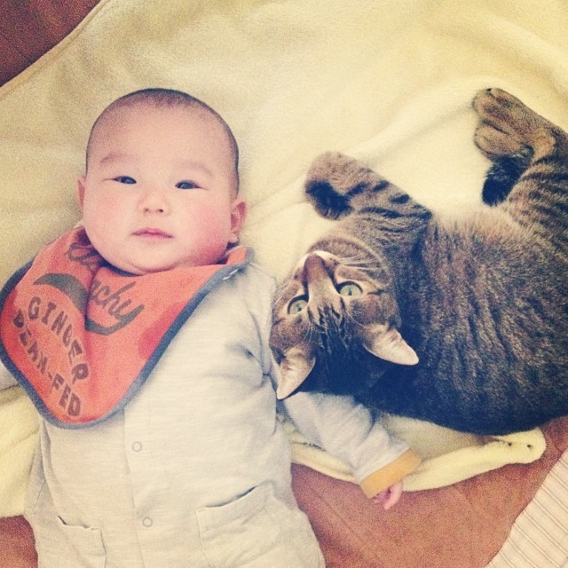 CatBabyBrother3