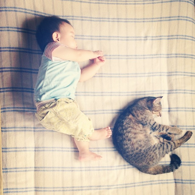 CatBabyBrother5