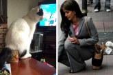 20 állat, akiben egy csepp szégyenérzet sincs